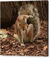 Fighter Squirrel Canvas Print