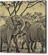 fighting male African elephants Canvas Print