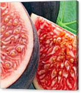 Figs Canvas Print