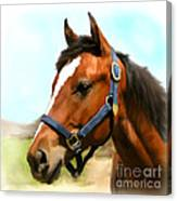 Filly Canvas Print