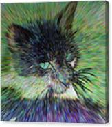 Filtered Cat Canvas Print