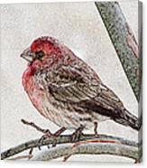 Finch Art Canvas Print