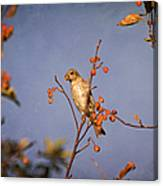Finch In A Cherry Tree Canvas Print