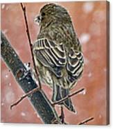 Finch On A Snowy Day Canvas Print