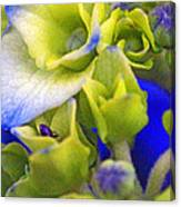 Find Ant Hydrangea Canvas Print