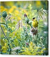 Find The Finch Canvas Print