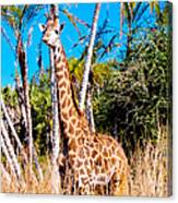 Find The Giraffe Canvas Print