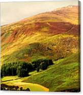 Find The Soul. Golden Hills Of Wicklow. Ireland Canvas Print