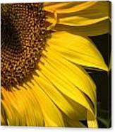 Find The Spider In The Sunflower Canvas Print
