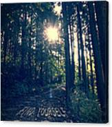 Find Yourself Go Run No. 6 - Forest With Sun Flare Canvas Print