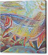 Fine Spotted Cutthroat Trout Canvas Print