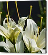 Finishing Blossoming - Featured 3 Canvas Print