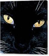 Fiona The Tuxedo Cat Canvas Print