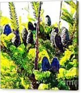 Fir Tree Buds Abstract Canvas Print