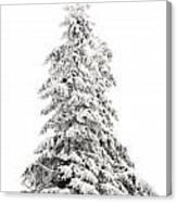 Fir Tree In Winter Canvas Print