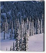 Fir Trees, Mount Rainier National Park Canvas Print
