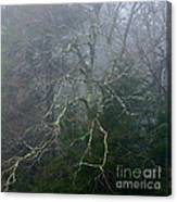 Fire Cherry In Mist Canvas Print