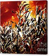 Fire In The Corn Field Canvas Print