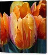 Fire Orange Tulip Flowers Canvas Print