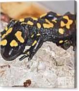 Fire Salamander Salamandra Salamandra Canvas Print