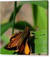Fire Skipper Canvas Print