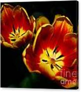Fire Tulip Flowers Canvas Print
