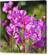 Fire  Weed 3 Canvas Print