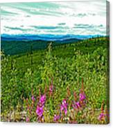 Fireweed And Mountains From Top Of The World Highway-yukon Canvas Print