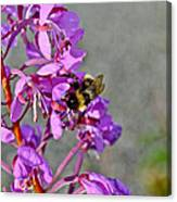 Fireweed Bee Canvas Print
