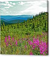 Fireweed Near Top Of The World Highway-alaska Canvas Print