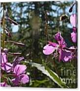 Fireweed Number 10  Canvas Print