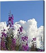Fireweed Sky Canvas Print