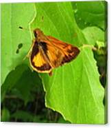 Firey Skipper Butterfly Canvas Print