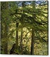 Firs And Ferns Canvas Print
