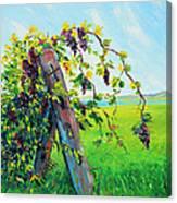 First Fruits Canvas Print
