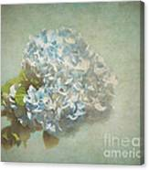 First Hydrangea - Texture Canvas Print