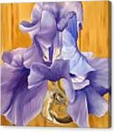 First Iris Of The Season Canvas Print
