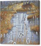 First Light Spring Cattails Canvas Print