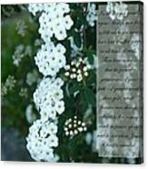 First Peter One Six To Seven White Floral  Canvas Print