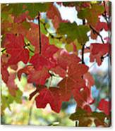 First Signs Of Fall  Canvas Print