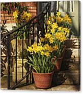 First Signs Of Spring Canvas Print