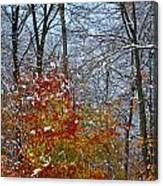 First Snow 2 Canvas Print