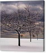 First Snow 2010 Canvas Print