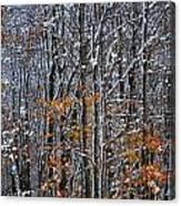 First Snow 3 Canvas Print