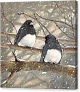 First Snow Dark-eyed Juncos Canvas Print