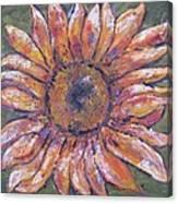 First Sunflower  Canvas Print