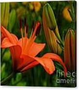 First To Bloom Canvas Print