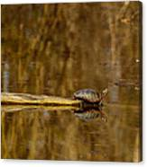 First Turtle Canvas Print