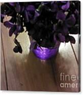 First Violets Canvas Print