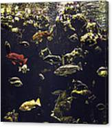 Fish Aquarium Canvas Print